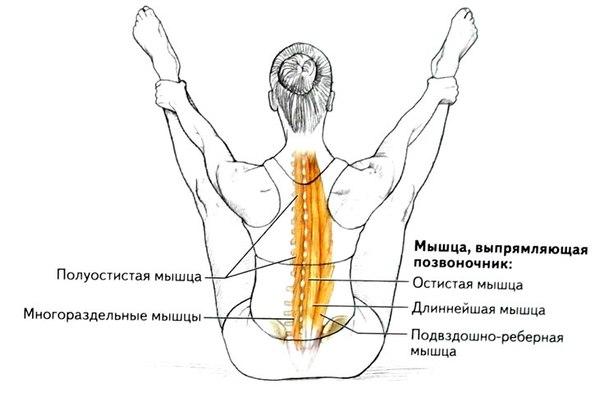 Почему болят мышцы спины вдоль позвоночника